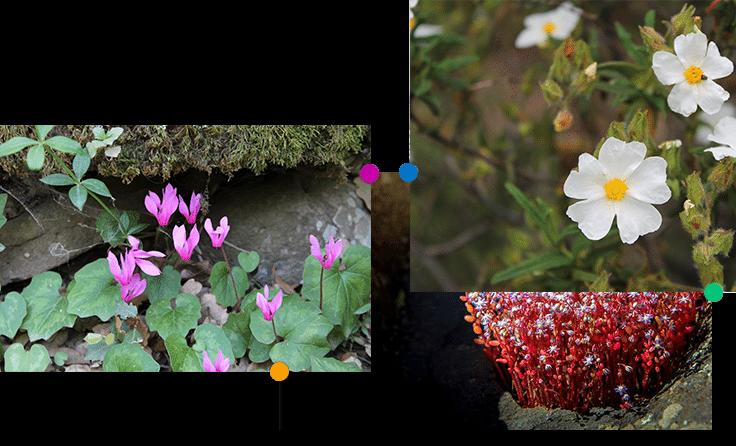 flora-della-giara-0011